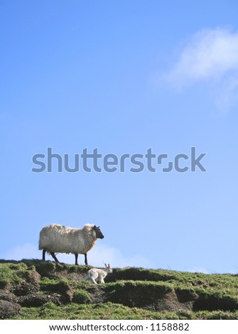 Sheep (ewe) and newborn lamb in field with idyllic blue sky - space for text etc.