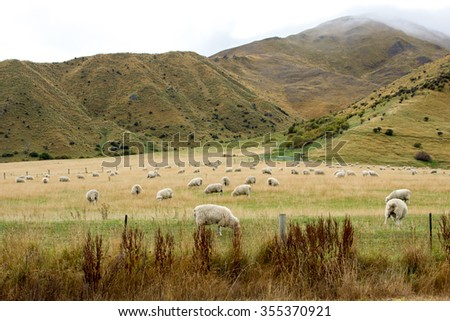 Sheep farm. - stock photo