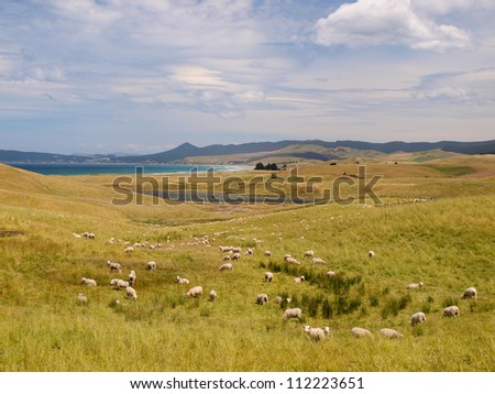 Sheep farm in hilly rural landscape along the coast - stock photo