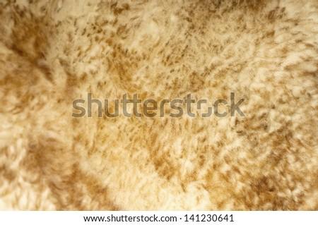 Sheep fur background texture - stock photo