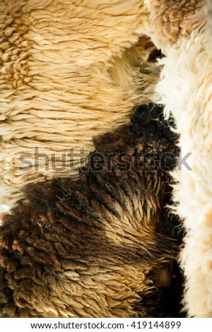 Sheep  fur texture skin pattern in the zoo.  - stock photo