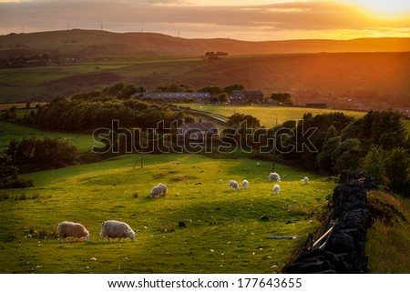 Sheep grazing in a beautiful landscape in the British countryside near the outskirts of Manchester. - stock photo