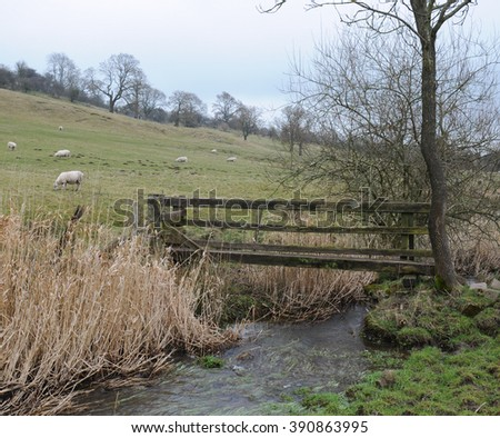 Sheep Grazing in a Field next to a Wooden Bridge over Bletch Brook, near the Rural Village of Tissington, within the Peak District National Park, Devon, England, UK - stock photo