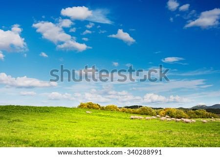 Sheep grazing in the green of the Sardinian countryside - stock photo