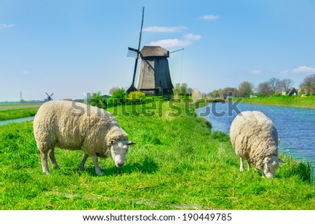 Sheep grazing near a dyke in the Netherlands - stock photo
