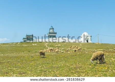 Sheep grazing near Cap Beddouza Lighthouse in Beddouza, Atlantic Coast, Morocco - stock photo