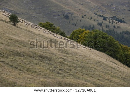 Sheep grazing on the green hills in the mountains of the Monti Sibylline near Castelluccio in Umbria, Italy - stock photo