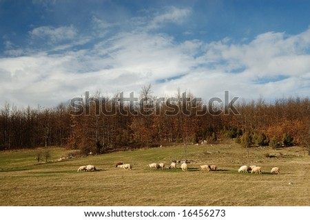 Sheep group in the field