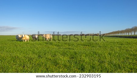 Sheep in a sunny meadow at fall - stock photo