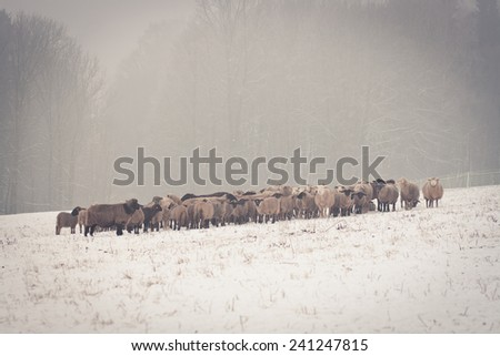 Sheep in fog - stock photo