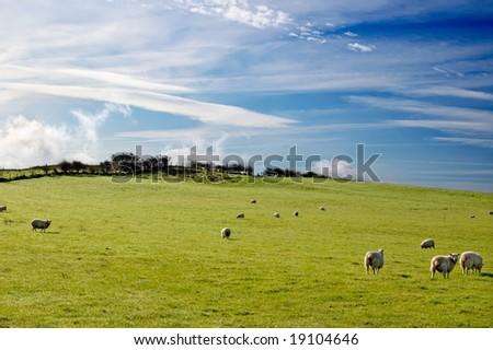 sheep in scotland - stock photo