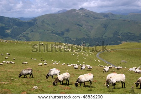 sheep in the mountains of pyrenees, Spain - stock photo