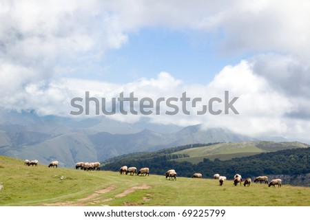 sheep in the mountains of Spain - stock photo