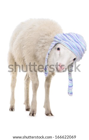 Sheep in warm hat. animal isolated on white background - stock photo