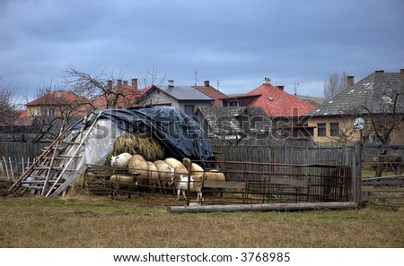 sheep near pile of straw in village - stock photo