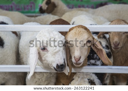 Sheep on a farm - stock photo