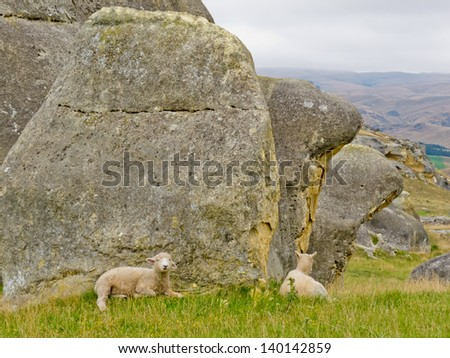 Sheep on mountain pasture grazing on lush green grass at the foot of large granite boulders on south island of New Zealand - stock photo
