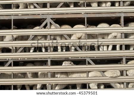 Sheep on multi-level transport vehicle - stock photo