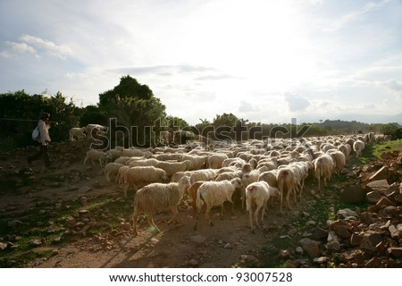 Sheep on rural road - stock photo