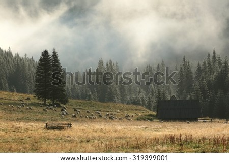 Sheep pasture in the valley in the Tatra Mountains. - stock photo