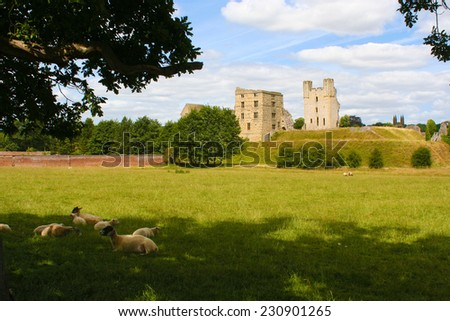 Sheep shaded by tree on hot summer day - stock photo
