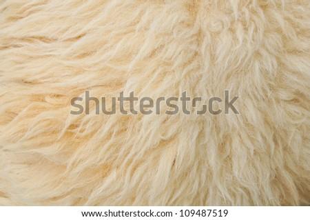 Sheep wool Background - stock photo