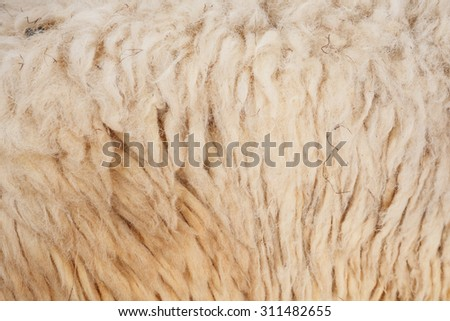 Sheep wool  background  - stock photo