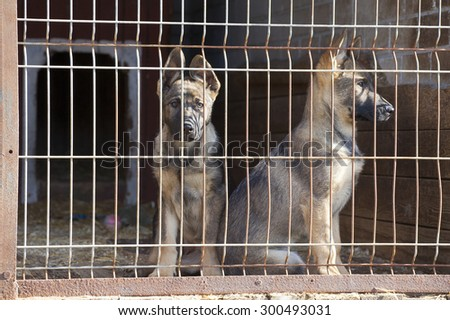 sheepdog dog puppies are sitting in the dogpound - stock photo