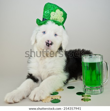 Sheepdog puppy wearing a St Patrick's Day hat laying with coins and green beer around him. - stock photo