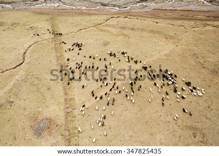 sheeps from the air