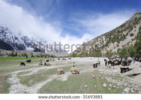 Sheeps & Goats In High Pasture - stock photo