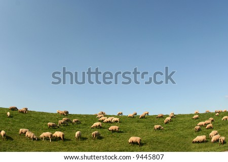 Sheeps on a hill near Hamburg