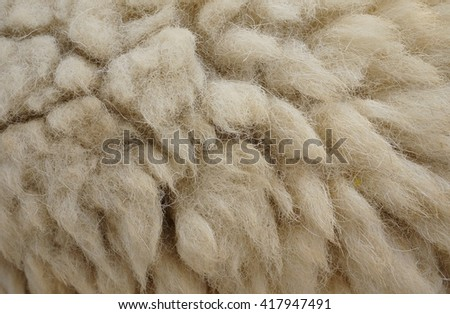 Sheepskin background. - stock photo