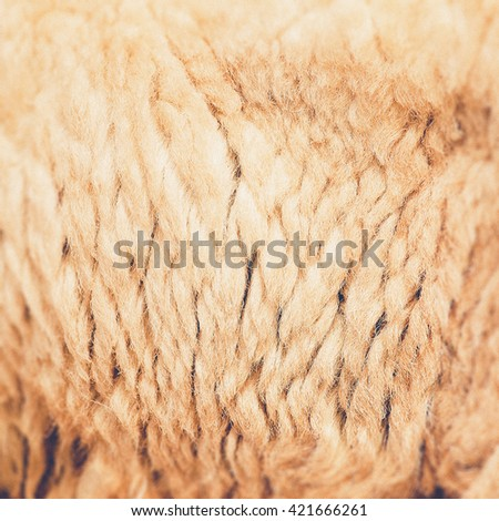 Sheepskin Background (Vintage filter effect used) - stock photo