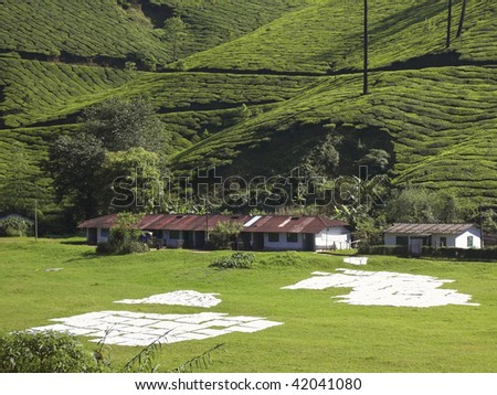 sheets drying on a grassy slope with a backdrop of estate workers homes and tea covered hills