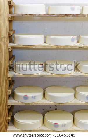 Shelf of young Gruyere de Comte Cheese in ripening cellar of Franche Comte dairy in France