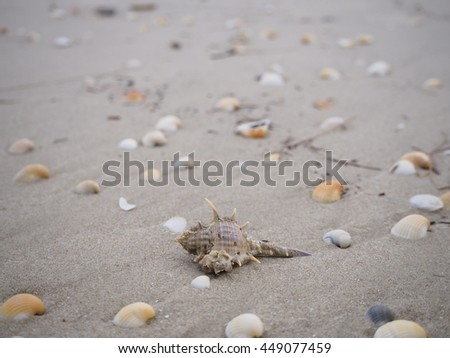 Shell and Beach
