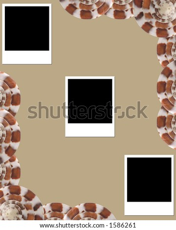 Shell and blank photos - stock photo