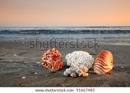 shell and corals on a beautiful beach - stock photo