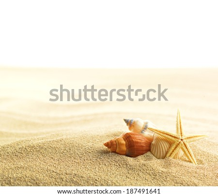 Shell and starfish on sandy beach isolated on white - stock photo