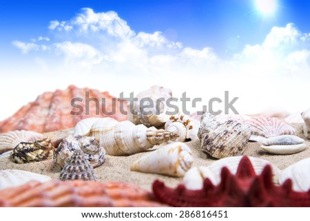 Shell and starfish on sandy beach over cloudy sky - stock photo
