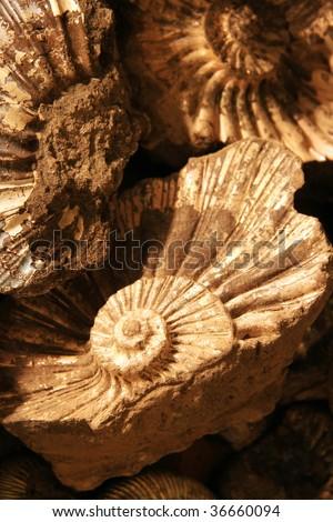 shell background - stock photo