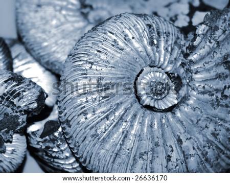 shell background (fossilized ammonite) - stock photo