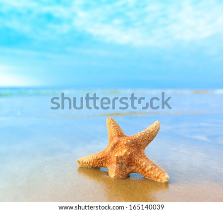 Shell Beach Fish  - stock photo