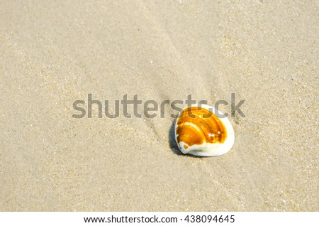 Shell brown stripes on the sand. - stock photo