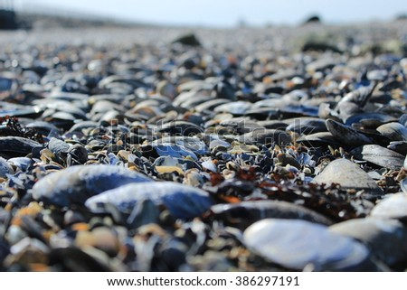 Shell Covered Beach - stock photo
