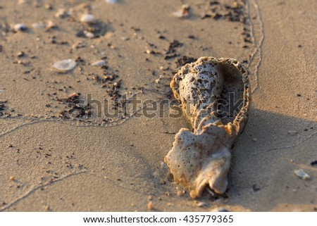 Shell decayed On the Beach