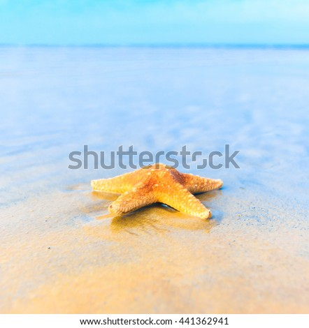 Shell Dream Sand  - stock photo