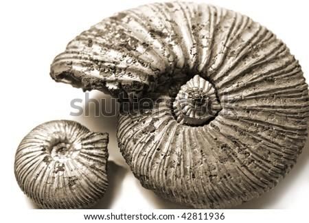 shell (fossilized ammonite) - stock photo