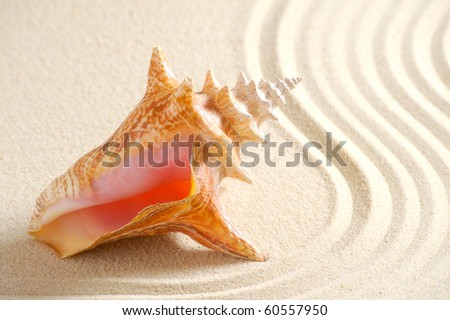 shell in sand - stock photo
